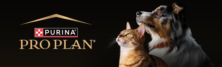 En iyi kedi maması hangisi? Kedim nasıl kilo alır? Köpekler nasıl eğitilir? Evcil hayvanlar hakkında soruların cevapları burada.