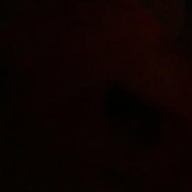 siyahkedi2407